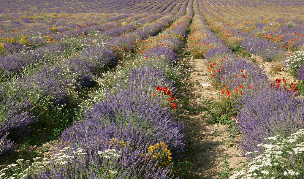 Réminiscence d'un jardin provençal