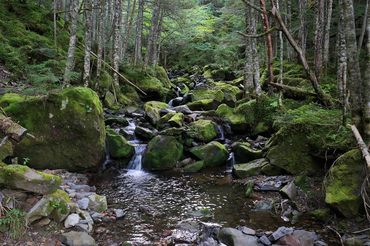 八ヶ岳の森と沢
