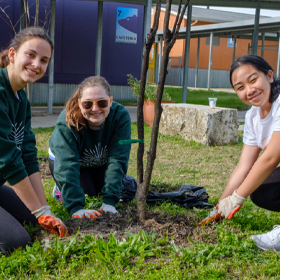Three student volunteers planting a tree