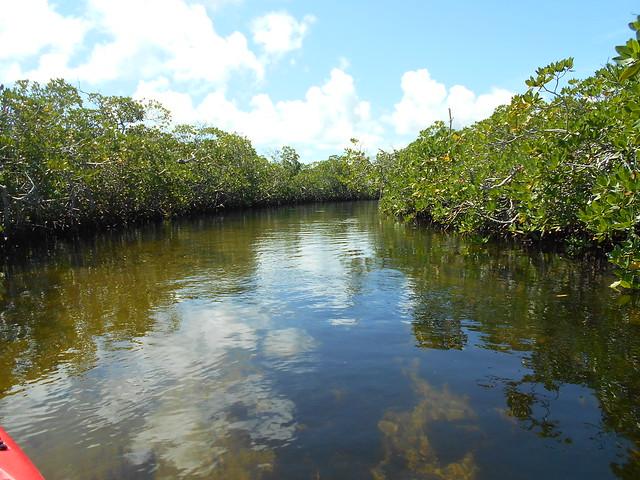 PM 4 February Key Largo Kayaking Tours 2021