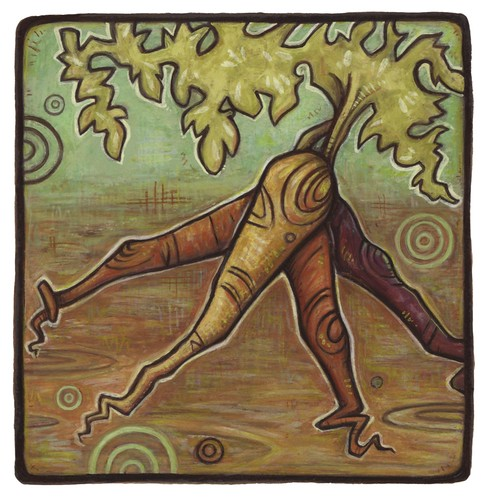 carrots. From Artist Spotlight: Kat VanderWeele, LimningHouse Illustration