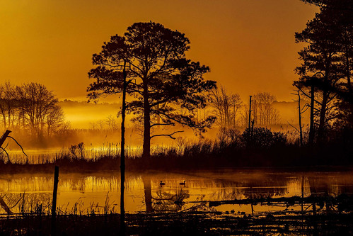 Blackwater Sunrise by Wayne Zussman | by Maryland DNR