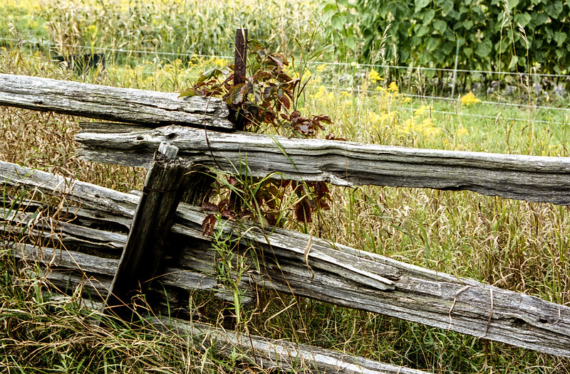 Wooden Fence Post with Wire Back Up