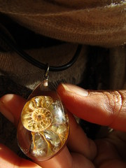 IMG_4641 fossil in resin