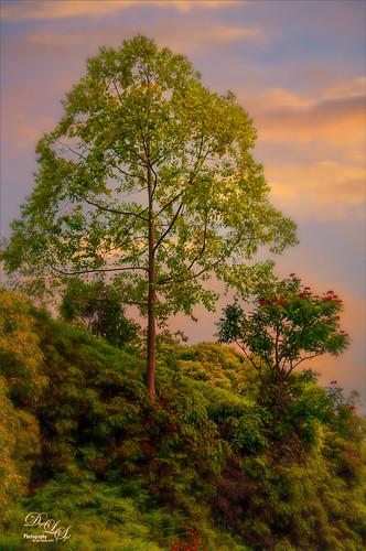 Image of Tree in Maui, Hawaii