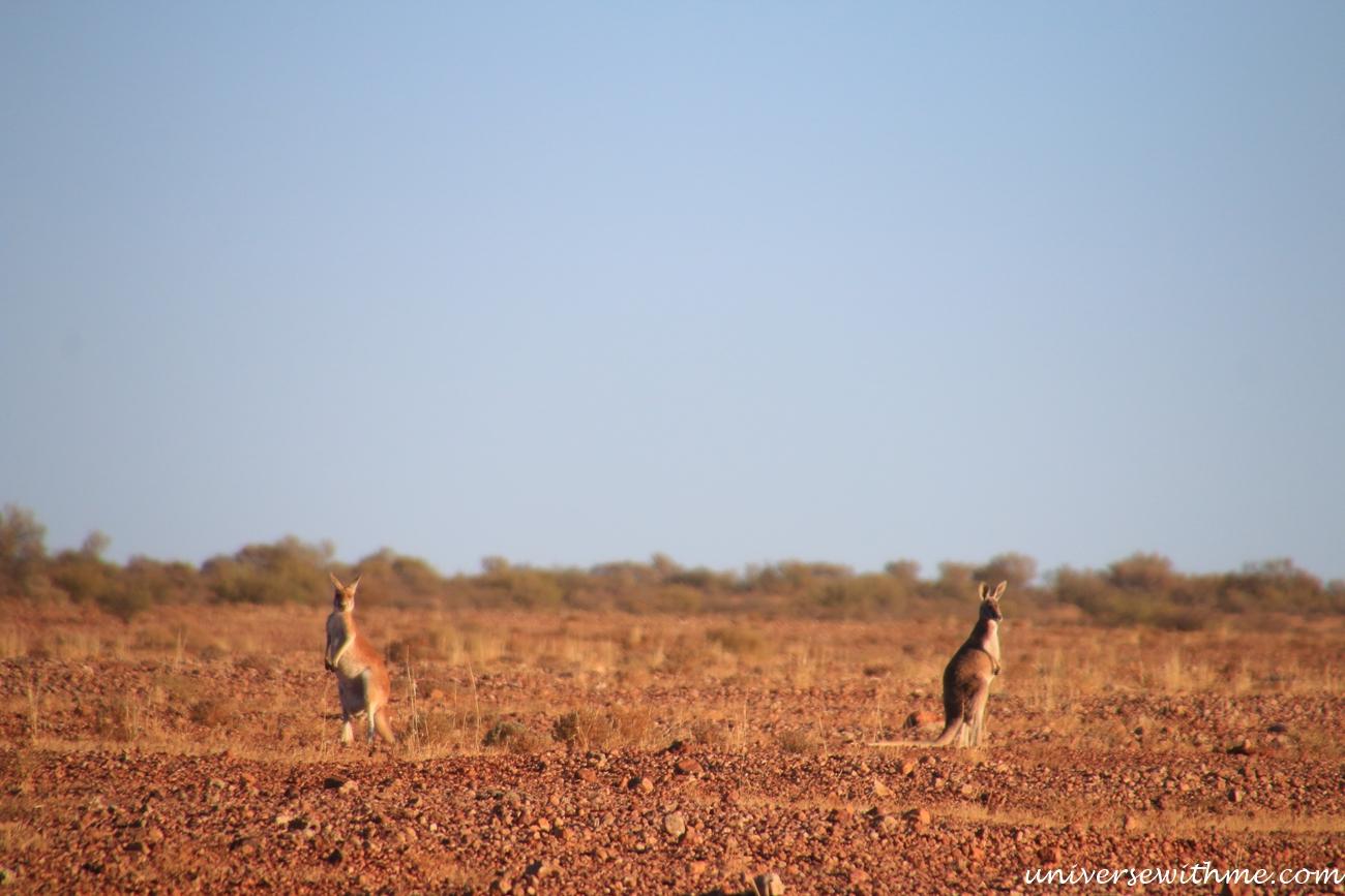 Australia Outback_069