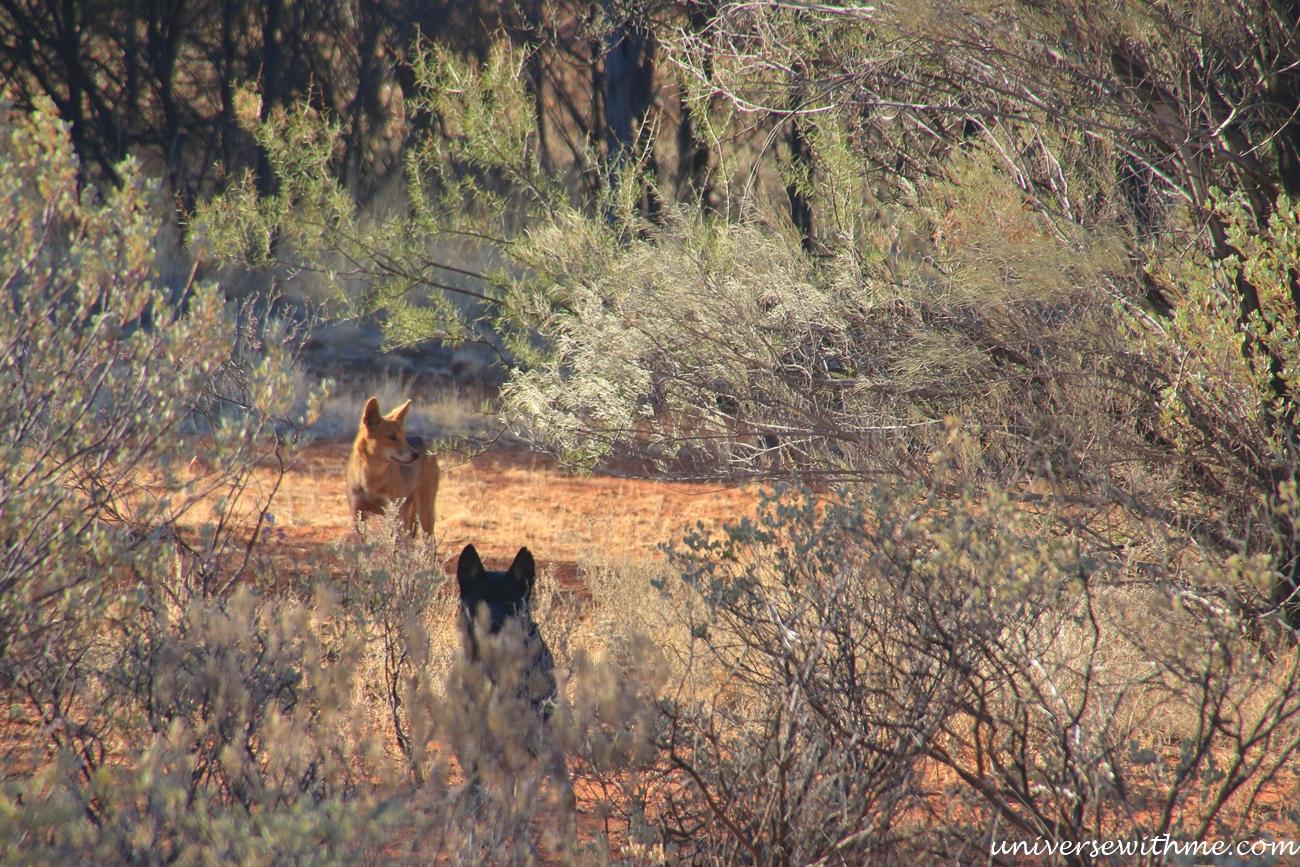Australia Outback_087