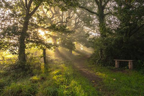 landscape landscapes landscapephotography forest forests wood woods morning morninglight sun sunrise sunrises fog foggy bench tree trees treescape leadinglines leading mood moody scene wales welsh pembrookshire