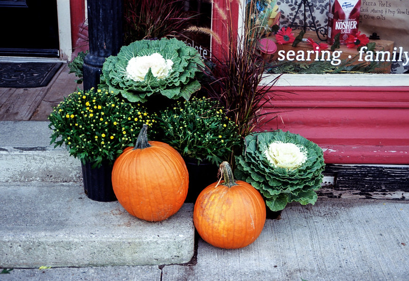 Decorative Gourd Display Season