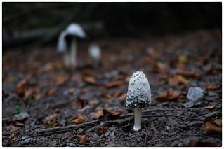 Untitled mushroom