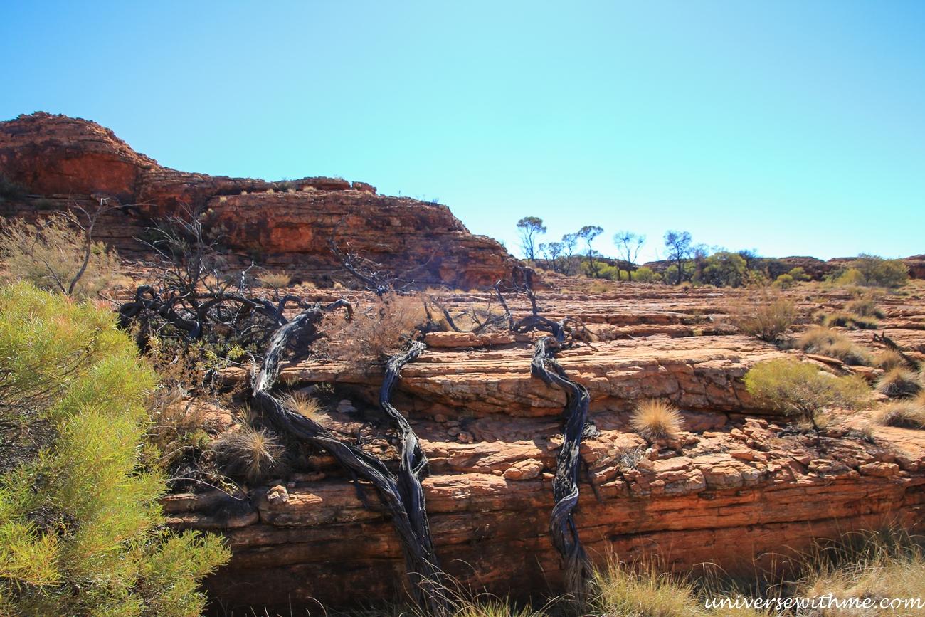Australia Outback_091