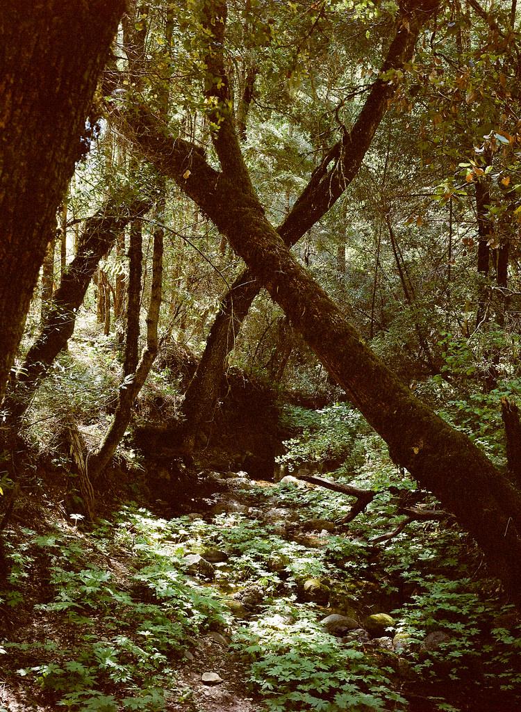 Monte Bello Open Space Preserve, California