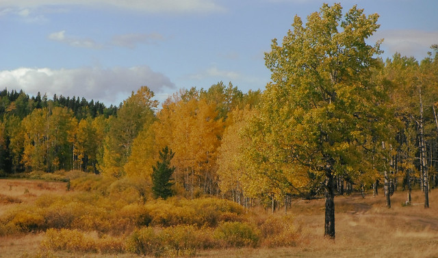 Autumn Heartland
