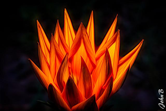 Goku Reignited