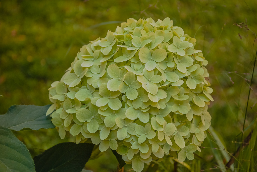lovely plant energy 09:41:16 DSC_8177