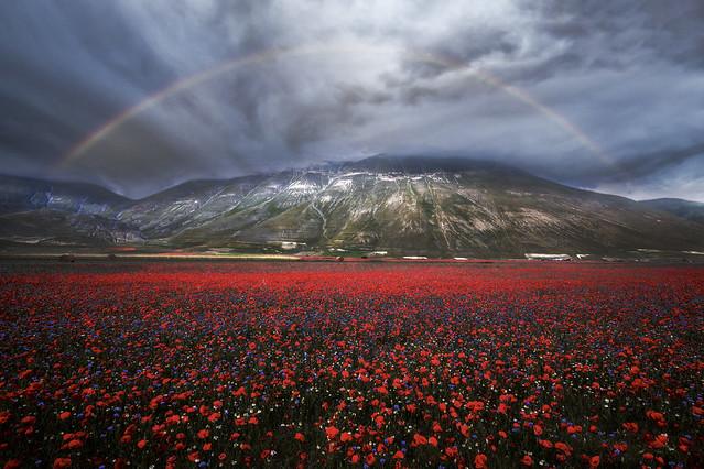 Monte Vettore in fiore