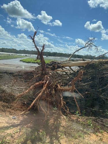 flowerwoodfarms fl cropdamage secretaryperdue hurricanesally loxleyfl loxley usa