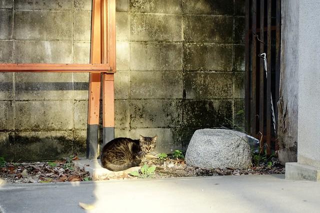 Today's Cat@2020ー09ー30