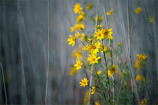Flowers and Reeds