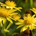 flower-00312