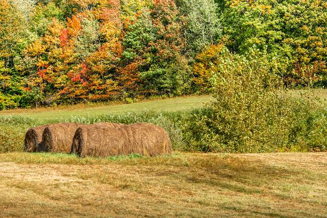 Autumn Haybales