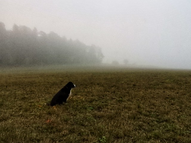 Morgondimma - Morningmist