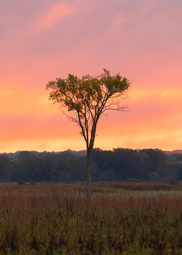 tree sunrise morning nature vertical sky clouds nopeople outdoors outside wisconsin midwest fall autumn background wallpaper canoneos5dmarkiv canonef100400mmf4556lisiiusm