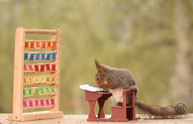 red squirrel reading in an school class outside