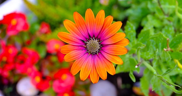 Solo Orange ..Lovely Flora