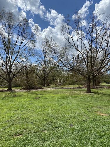 cropdamage pecan pecandamage underwoodfarms perdue hurricanesally hurricanesallydamage summerdale al usa