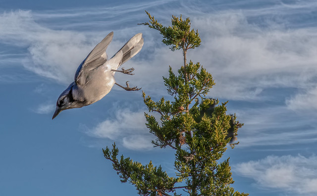 Blue Jay Approach: Flaps Up, Landing Gear Down