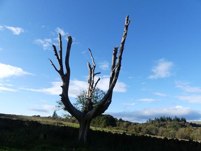 Antler tree