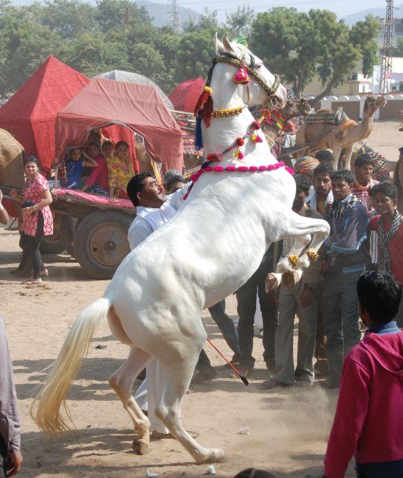 DSC_1993IndiaPushkarCamelFair