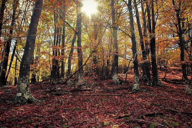 Autumn 🍁🍁🍁🍁🍁