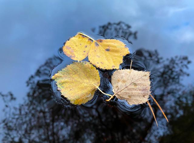 Autumn leafs (explore)