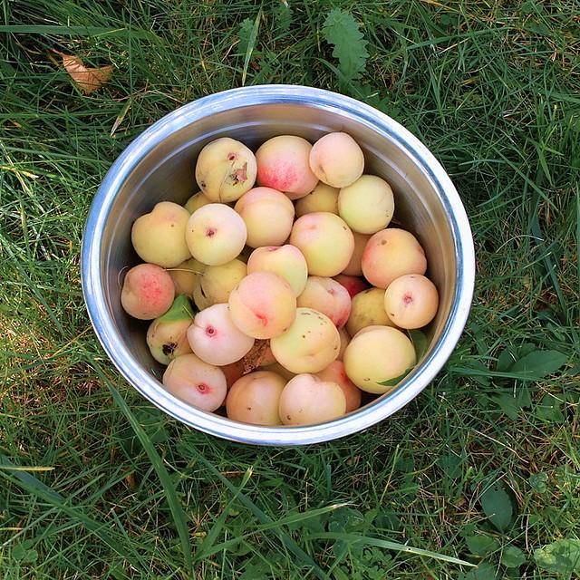 Organic Arctic Supreme Peaches