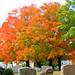 Cemetery Foliage