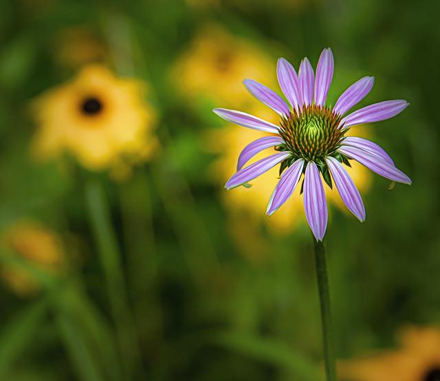Wild Flowers....Explore