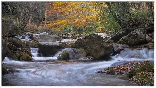 balsam northcarolina unitedstatesofamerica tennessee greatsmokeymountains fall trees river water stream boulders rocks foliage landscape little pigeon