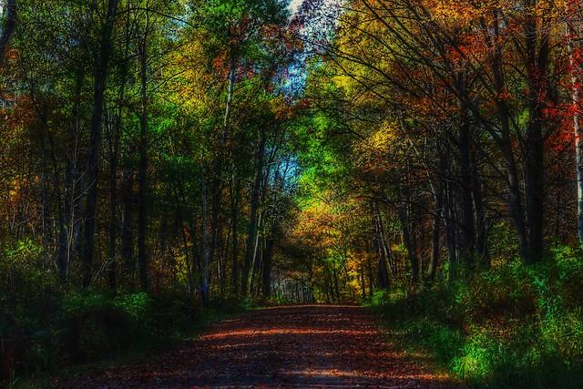 Autumn Shades #2929 (Explored 10/1/2020)