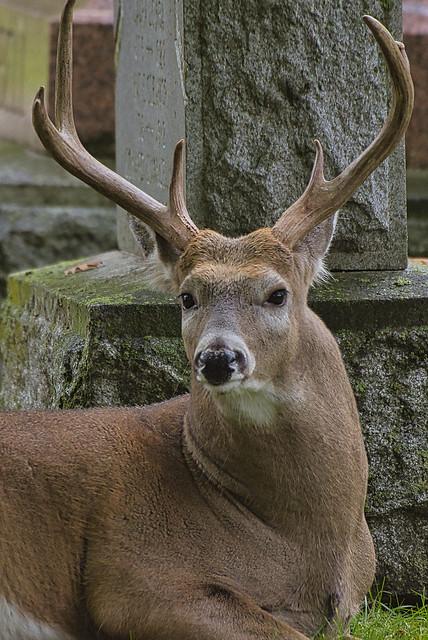 The big buck (In explore Oct2/20)