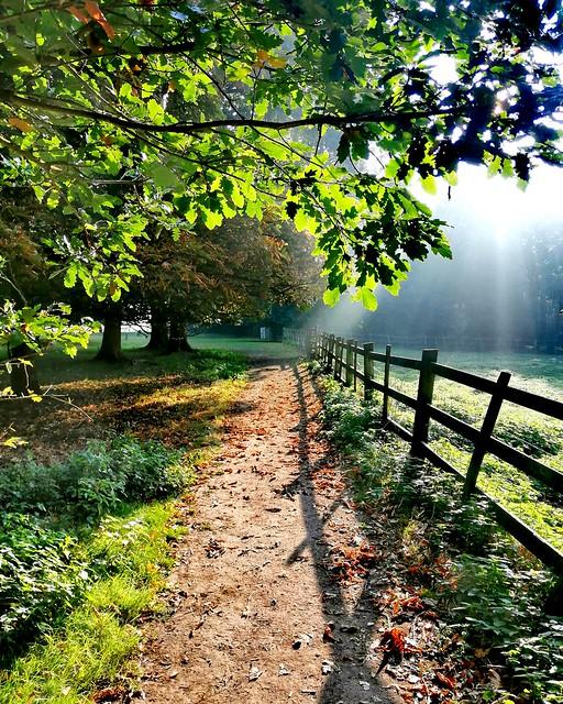 Early Autumn light