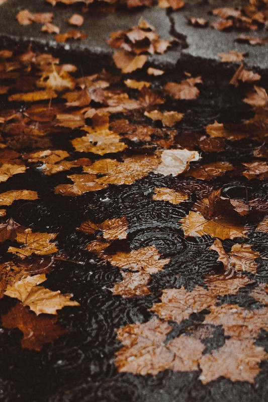 Autumnal leaves, nothing better than feeling them crunch underfoot
