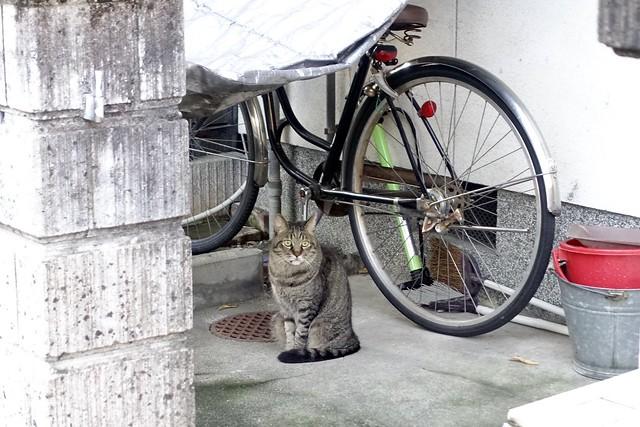 Today's Cat@2020ー10ー01