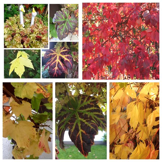 Die Blätter im Herbst.