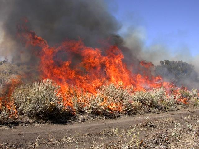 A rangeland fire