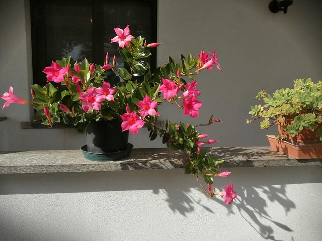 IMG_20200929_145827 - Fiori al sole - Flowers in the sun.
