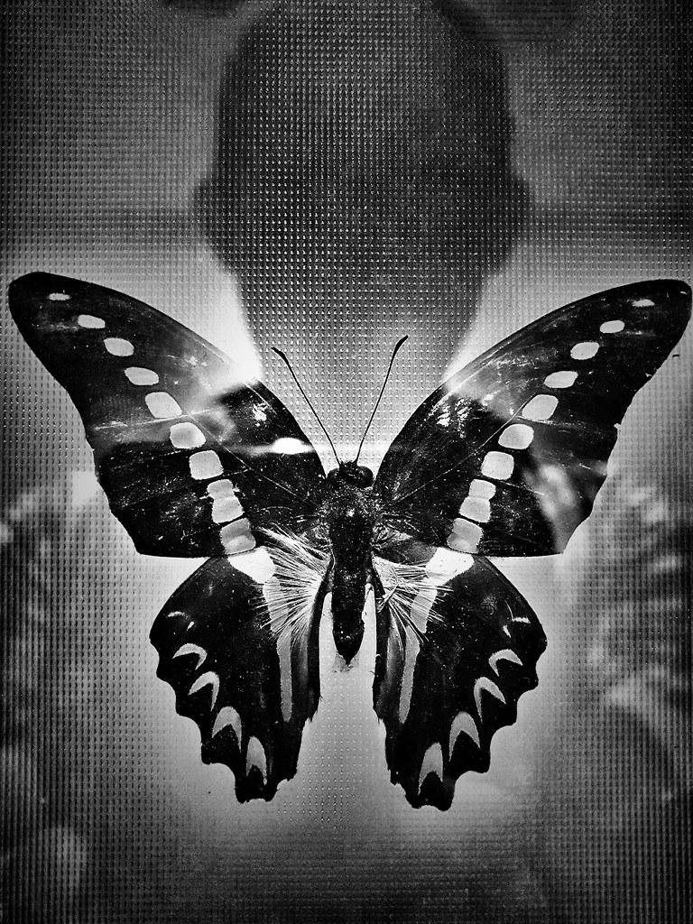 - butterfly effect -