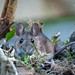 This cute wood mouse visited my garden this evening