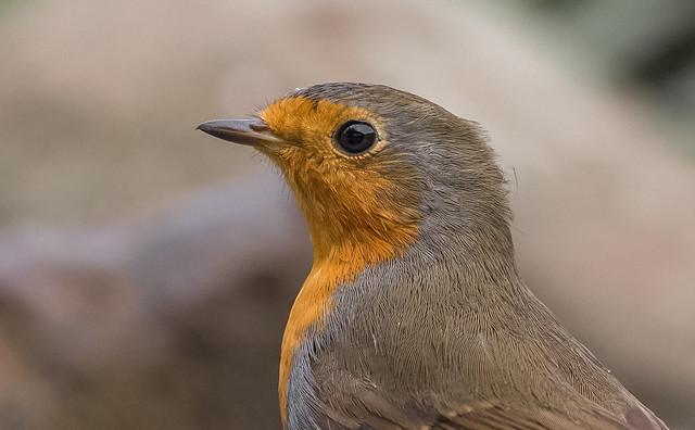 Robin 😍